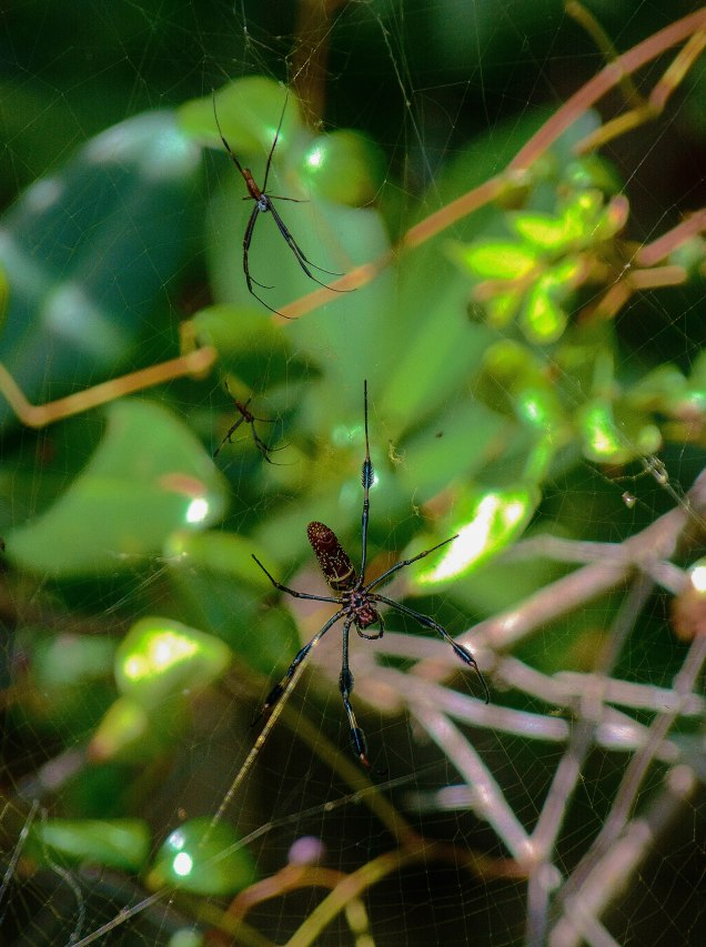 Spider family in the web