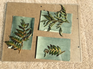 contact printing with some ferns