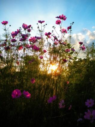 Flowers at Dusk