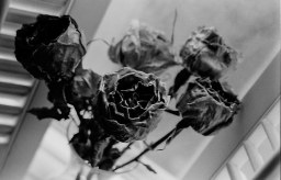 flowers, from the last time I saw you